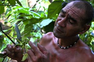 huahine, the love of vanilla